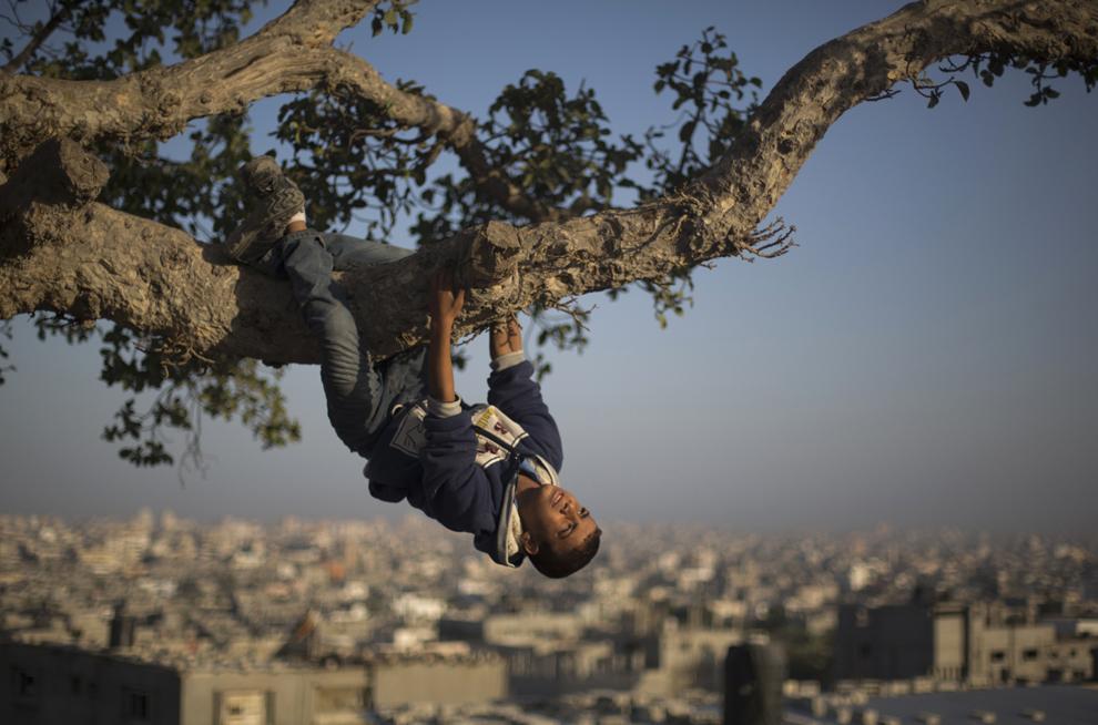 Un copil palestinian se joacă într-un copac, în Gaza,  miercuri, 23 octombrie 2013.