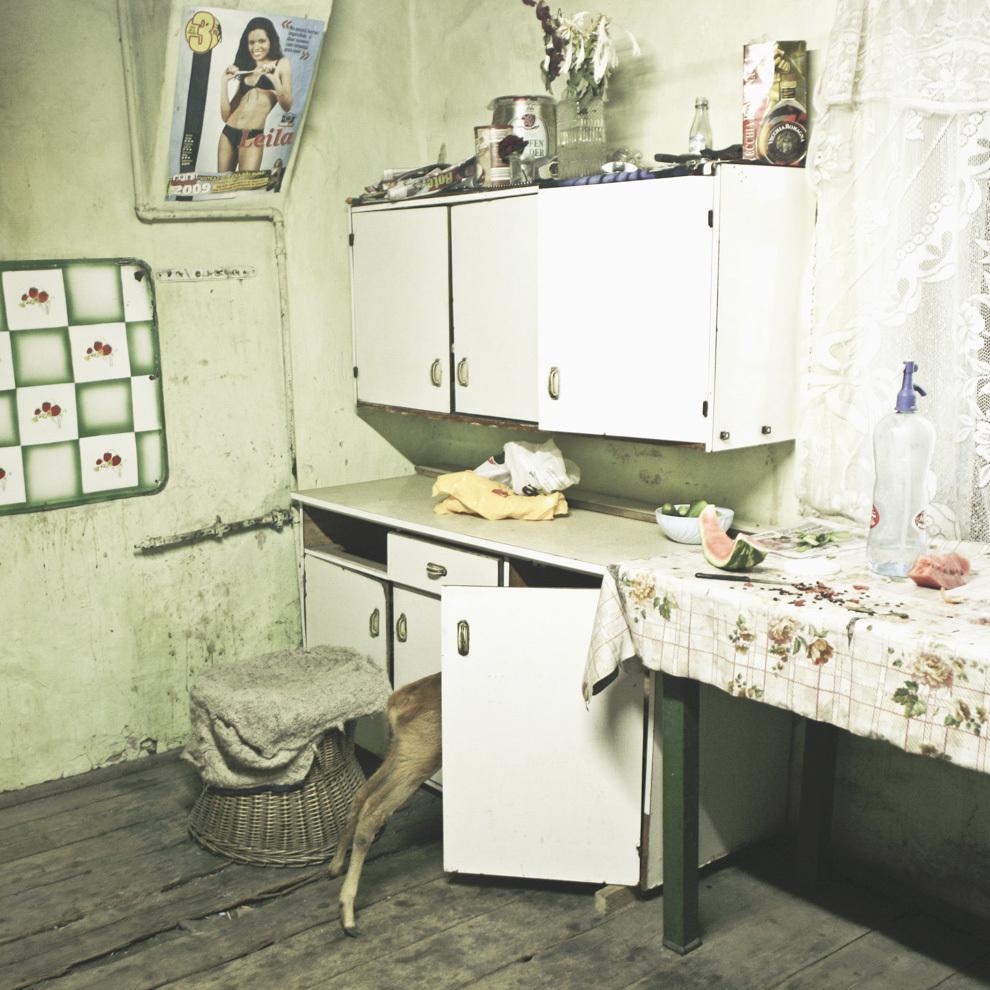 Căprioara Bambi în bucătăria familiei Kovary, Copşa Mică, Sibiu.