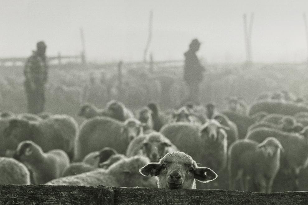 Letea, stână la marginea satului.