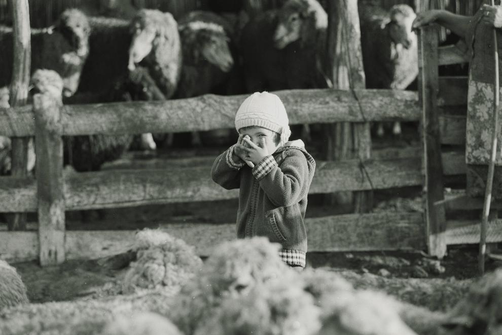 Letea, fiica cea mică asistă la mulsul oilor, dimineaţa devreme.