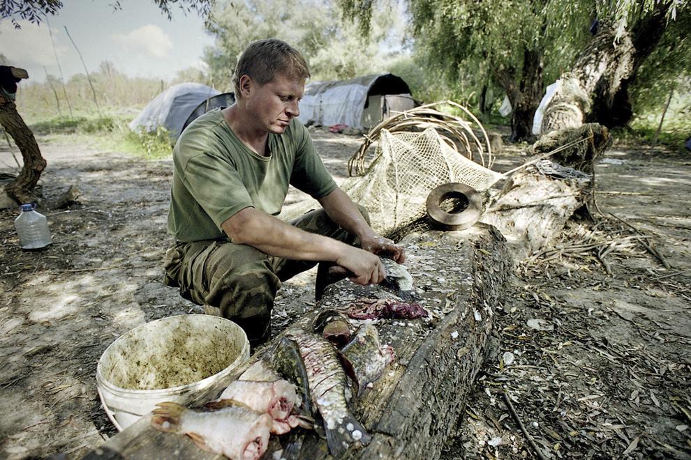Pescar pregătind peştele pentru un borş tradiţional.