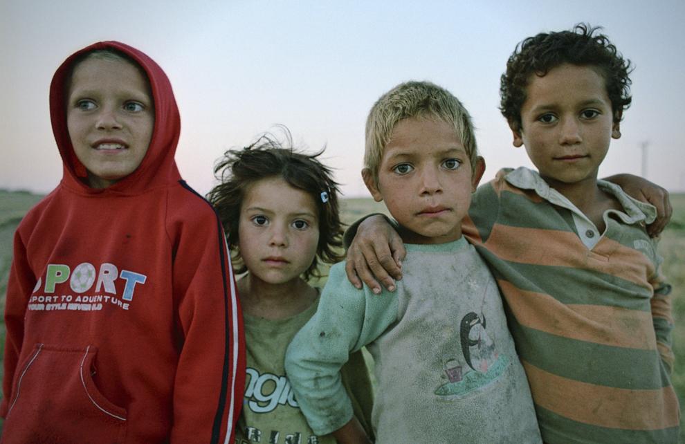 Copii de stână în Dobrogea.