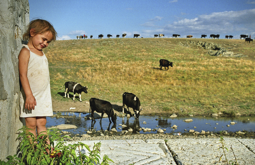 Dobrogea, cireada se întoarce de la păscut, o fetiţă aşteaptă vaca la cişmea.