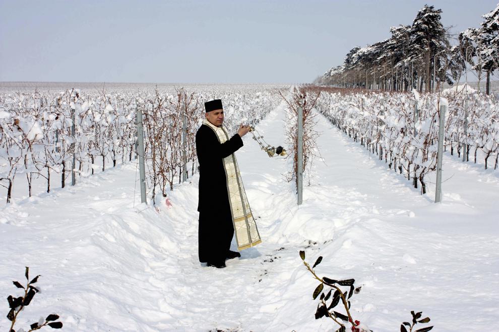 Un preot sfinţeşte viţa de vie din Segarcea, cu ocazia sărbătoririi Sf. Trifon, miercuri, 1 februarie 2012. În ziua de pomenire a Sf. Trifon se practică o serie de rituri, cu scopul de a asigura protecţia şi fertilitatea livezilor de pomi fructiferi şi a viilor.