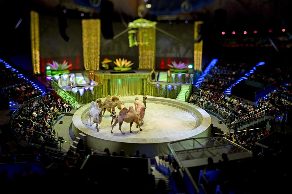 Spectacol de circ, la Circul Globus, în Bucureşti, joi, 3 aprilie 2014.