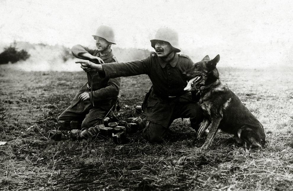 Soldaţi germani dau ordine unui câine ce acţionează ca şi mesager militar, în timpul Primului Război Mondial, circa 1916.