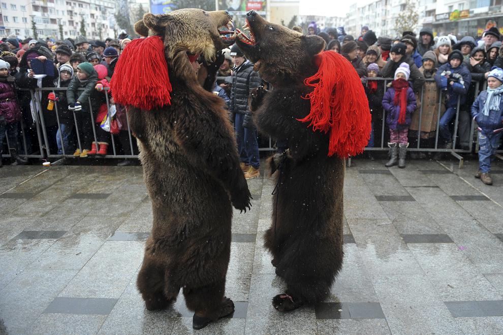 Două persoane costumate în urşi participă la Festivalul tradiţiilor şi obiceiurilor, în Bacău, sâmbătă, 27 decembrie 2014.