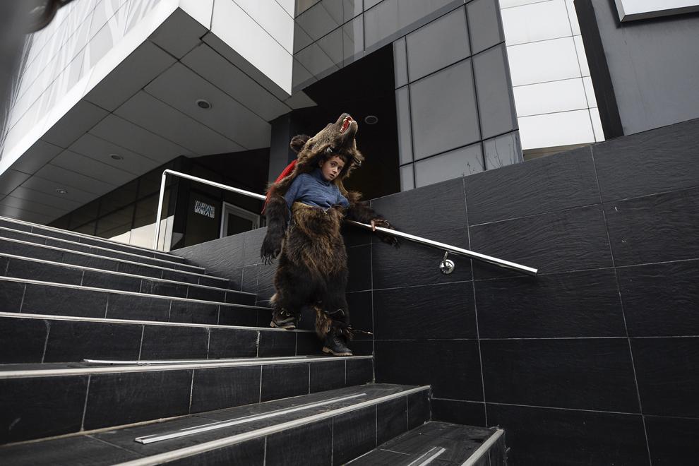 Un copil costumat în urs, din comuna Dofteana, judeţul Bacău, coboară treptele unei clădiri de birouri, în centrul Bucureştiului, marţi, 23 decembrie 2014.