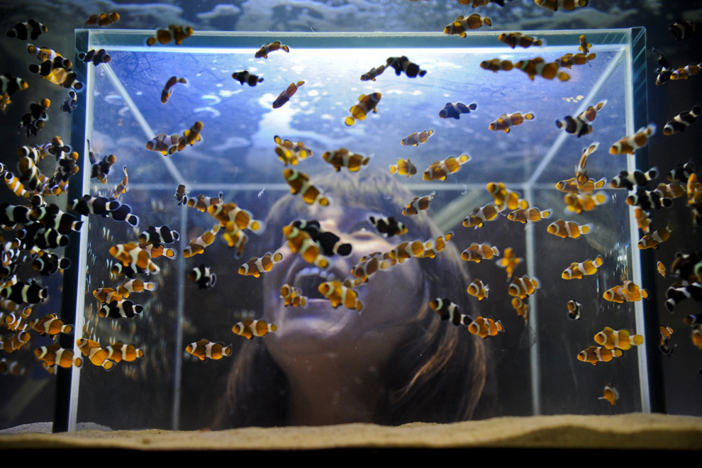O femeie priveşte peştii din interiorul unui acvariu în timpul unui festival al animalelor de companie, în Lisabona, sâmbătă, 9 februarie 2013.