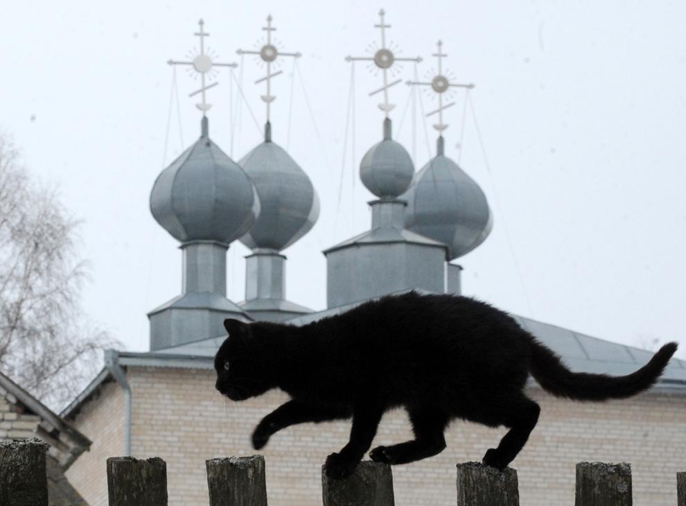 O pisică neagră păşeşte pe un gard aflat în faţa unei biserici ortodoxe, în satul bielorus Yapesochie, la 150 de km sud-vest de Minsk, sâmbătă, 19 februarie 2013.