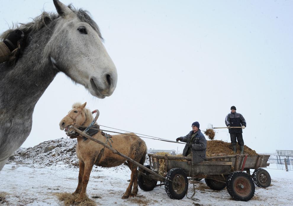 Un fermier bielorus încarcă o căruţă trasă de un cal, în timp ce un al doilea struneşte animalul, în satul Zapesochie din Bielorusia, sâmbătă, 19 februarie 2013.