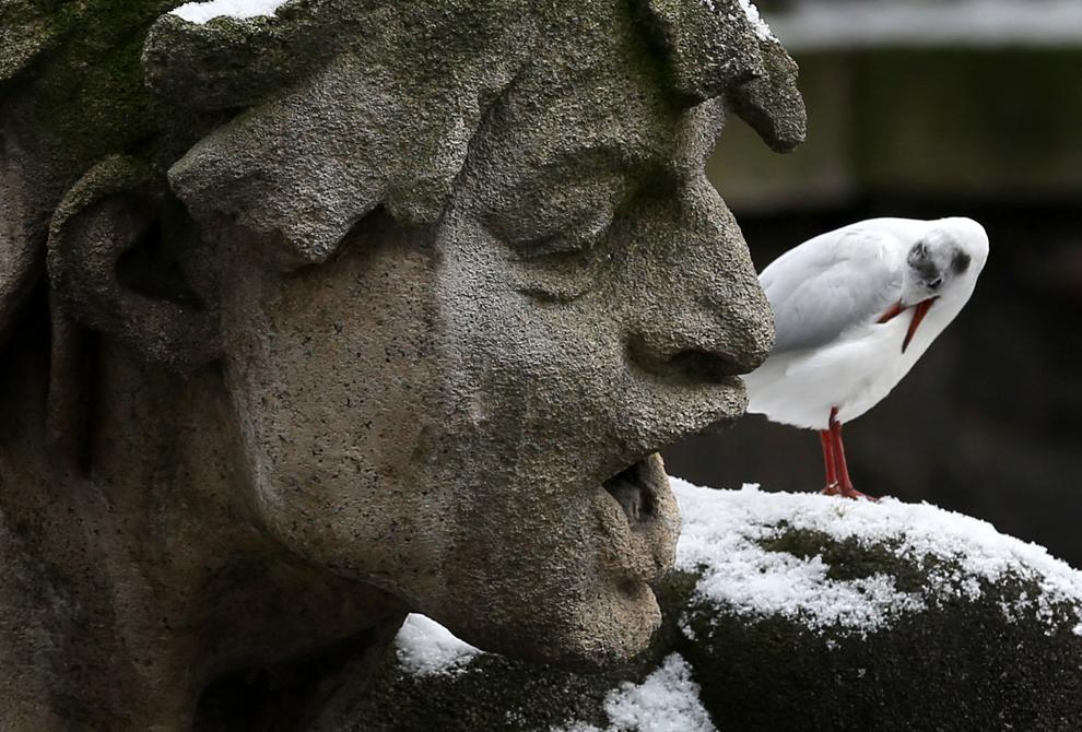 Un pescăruş stă pe o statuie, în oraşul german Dusseldorf, luni, 21 februarie 2013.