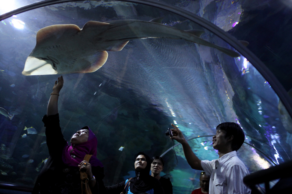 Mai mulţi vizitatori urmăresc speciile marine prezente în Acvariul KLCC din Kuala Lumpur, luni, 11 februarie 2013.