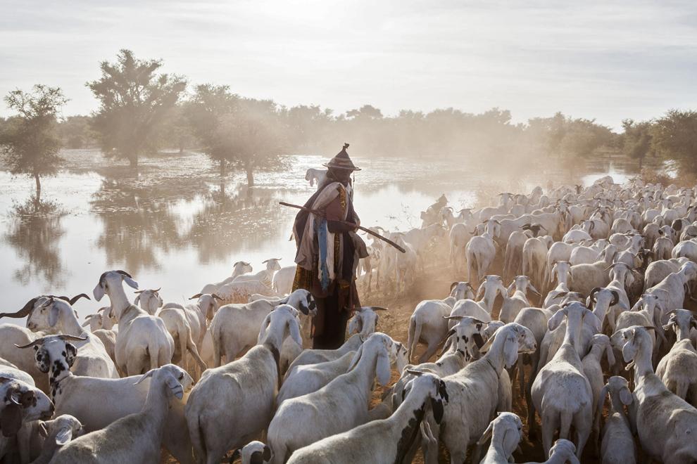 Un cioban îşi conduce turma de capre pe drumul către Massina, în Mali, miercuri, 23 ianuarie 2013.