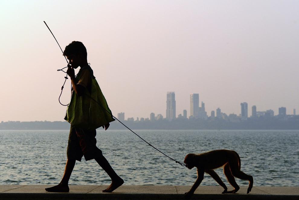 Suraj, în vârstă de 11 ani, se îndreaptă cu maimuţa sa spre un grup de turişti pentru a-i distra, pe faleza Marine Drive din Mumbai, marţi, 5 martie 2013.