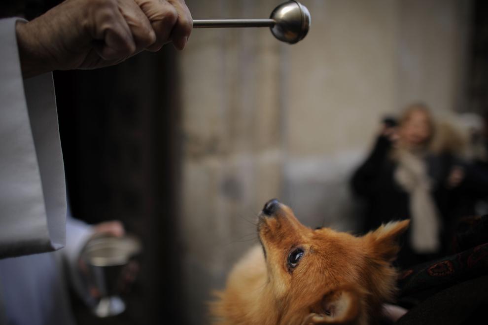 Un câine este stropit cu apă sfinţită de către un preot, în biserica San Anton din Madrid, de ziua sfântului Anton, joi, 17 ianuarie 2013.