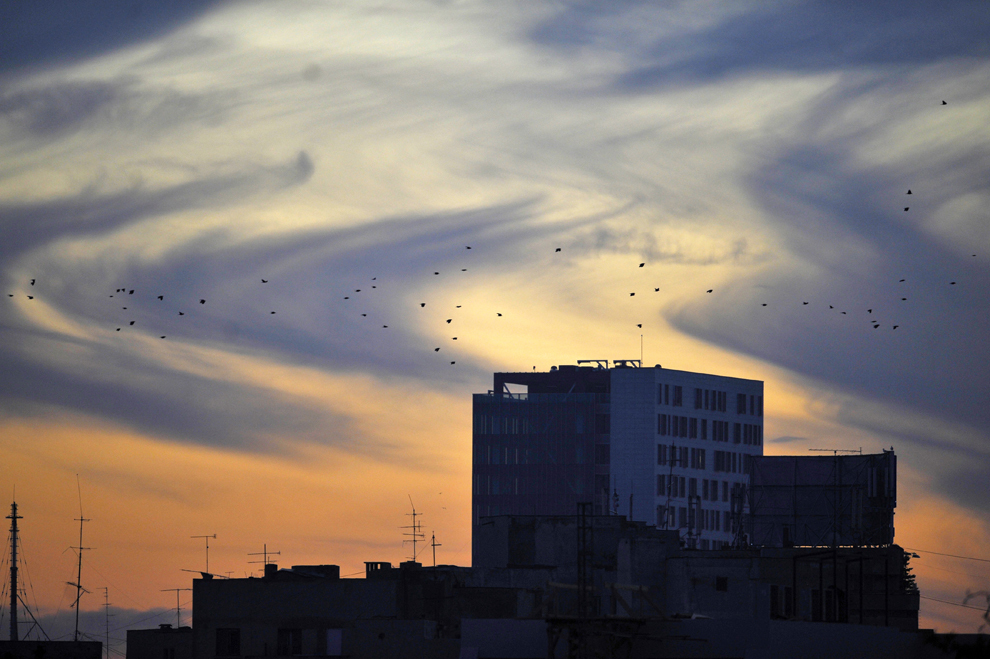 Păsări zboară deasupra oraşului Bucureşti, miercuri, 31 octombrie 2012.