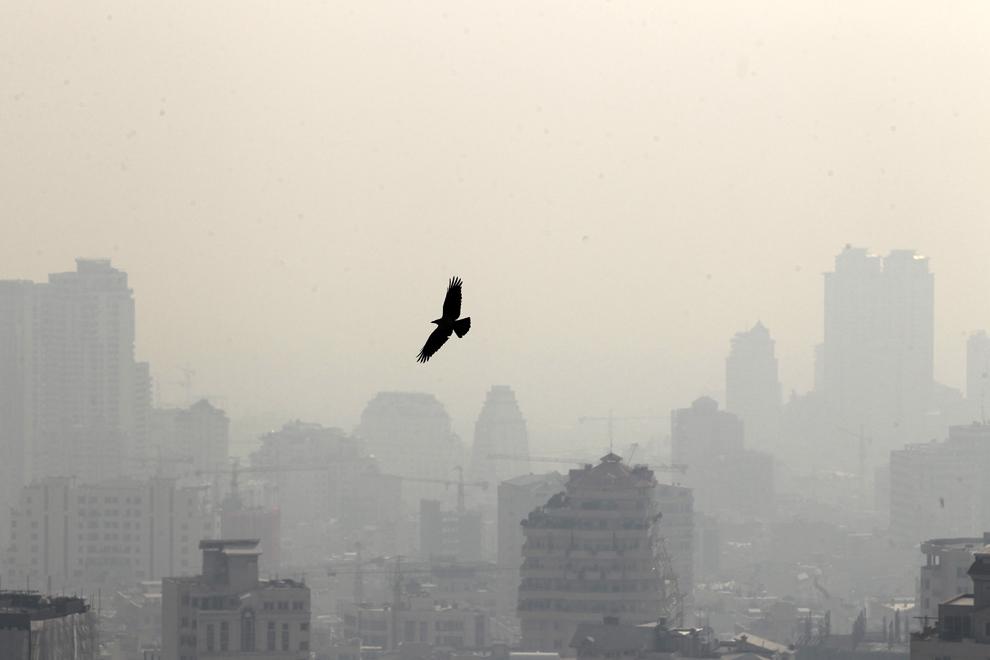 O pasăre zboară pe cerul poluat al capitalei iraniene, Teheran, luni, 7 ianuarie 2013.