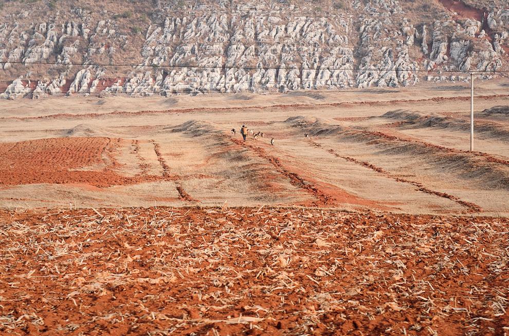 Un fermier chinez îşi paşte animalele pe câmpul său afectat de secetă, în localitatea Fuyan din provincia chineză sud-vestică Yunnan, luni, 20 februarie 2012. China este afectată în mod regulat de perioade de secetă.