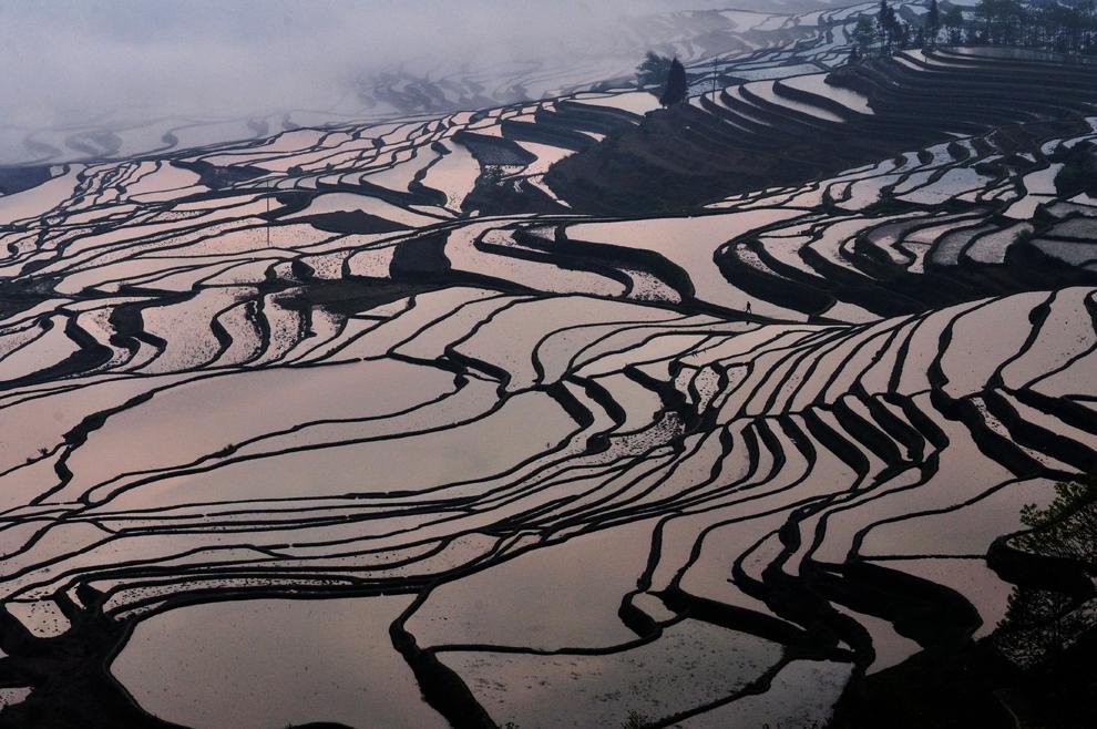 O fotografie realizată pe 11 martie 2012 înfăţişează panta unui deal pe care se află câmpuri cu orez, în regiunea muntoasă Yuanyang, din provincia chineză Yunnan. Potrivit unui studiu al Organizaţiei Naţiunilor Unite  rata mondiala a deforestării a ajuns la 6.4 milioane de hectare pe an, Asia făcând excepţie de la acest trend ascendent, în mare parte datorită reîmpăduririlor extensive din China.