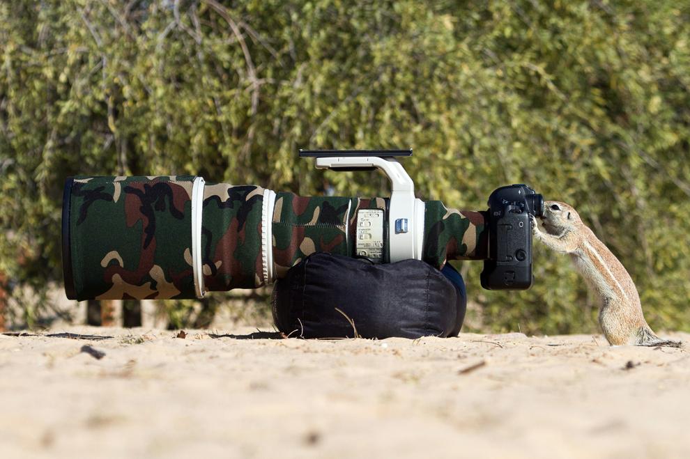 O veveriţă se uită prin vizorul unei camere foto, în parcul transfrontalier Kgalagadi din Botswana, luni, 1 aprilie 2013.