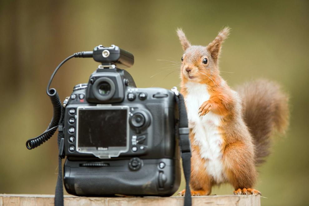 O femelă de veveriţă stă lângă o cameră foto, în Hexham, Northumberland, Marea Britanie, miercuri, 10 aprilie 2013.