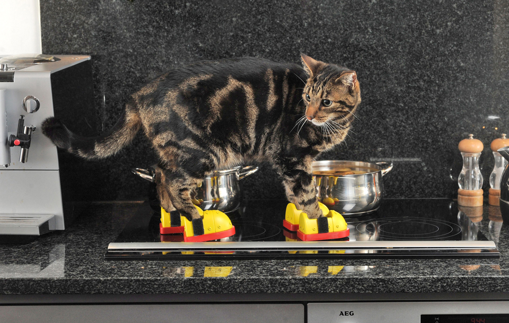 Pentru pisicile curioase şi pentru protecţia lăbuţelor acestora au fost inventate ghete speciale care să le protejeze dacă vor călca pe suprafeţele încinse din bucătărie. 43% dintre proprietarii de pisici din Marea Britanie consideră că bucătăria este un loc periculos pentru animalele lor de companie.