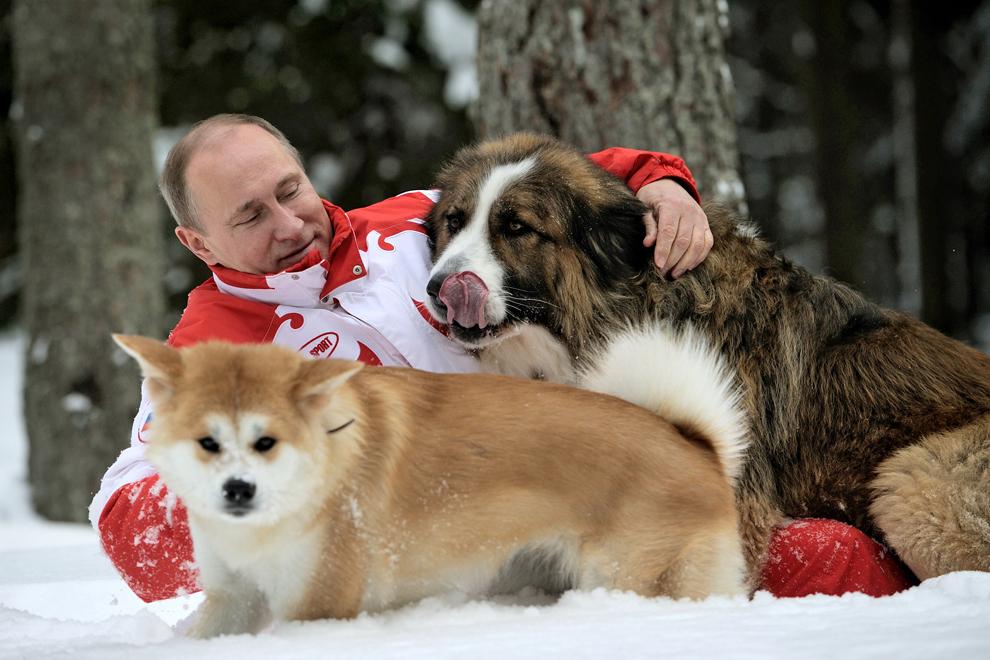 """Această fotografie datată 24 martie 2013 îl prezintă pe preşedintele rus Vladimir Putin în timp ce se joacă cu câinii săi, """"Buffy"""" (sus) şi """"Yume"""", la reşedinţa Novo-Ogariovo de lângă Moscova."""