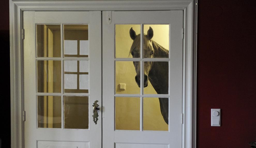 """Un cal arab pe nume Nasar stă pe coridorul unei case, în Holt, Germania, luni, 10 februarie 2014. Propietarul casei, doctorul Stephanie Arndt, a adăpostit calul în timpul uraganului """"Xaver"""", iar de atunci Nasar preferă să stea la interior."""