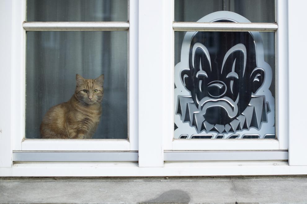 O pisică stă la fereastră alături de silueta unui clovn trist, în Hamburg, Germania, marţi, 18 februarie 2014.