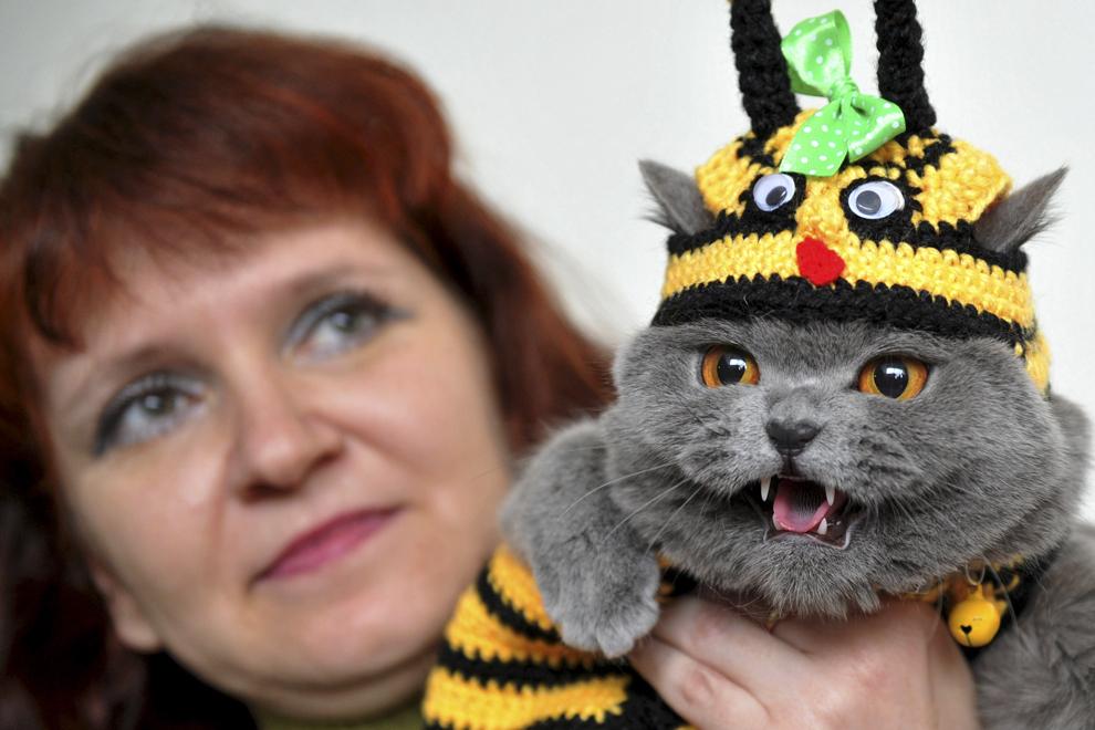 O femeie ţine în braţe o pisică, din rasa British Shorthair, îmbracată cu un costum de albină, în timpul unei expoziţii feline, în Bishkek, Kyrgystan, duminică, 23 martie  2014.