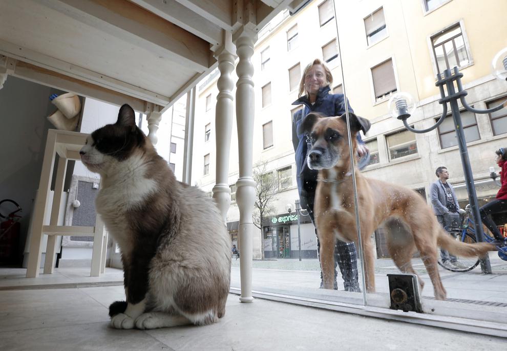 Un câine priveşte o pisică ce stă în cafeneaua Miagola din Torino, Italia, sâmbătă, 22 martie  2014.