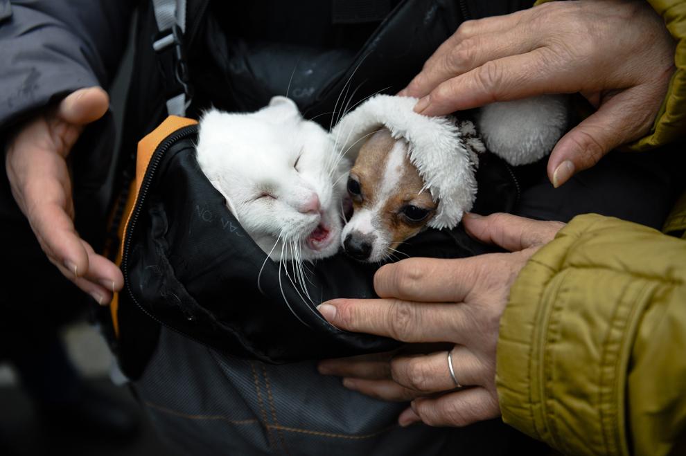 O pisică şi un căţel stau într-un rucsac, în timpul unui miting împotriva legii eutanasierii câinilor fără stăpân, în Bucureşti, sâmbătă, 8 martie 2014.