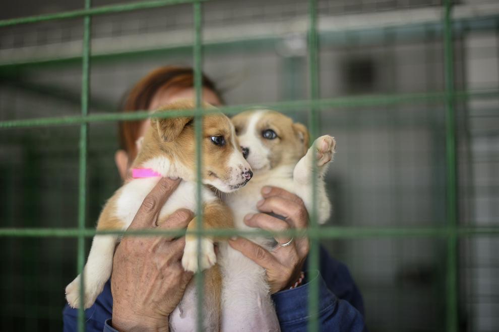 Doi căţei adoptaţi de Steven Seagal pot fi văzuţi la centrul de protecţie a animalelor Dogtown, în Uzunu, comuna Călugăreni, judeţul Giurgiu, duminică, 30 martie 2014. Actorul Steven Seagal a adoptat la distanţă doi căţei din adăpostul Dogtown de lângă Bucureşti, aleşi de soţia şi băiatul lui.