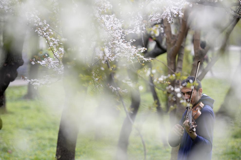 Medicul Florin Gheorman exersează la vioară în Parcul Cişmigu din Bucureşti, luni, 24 martie 2014.