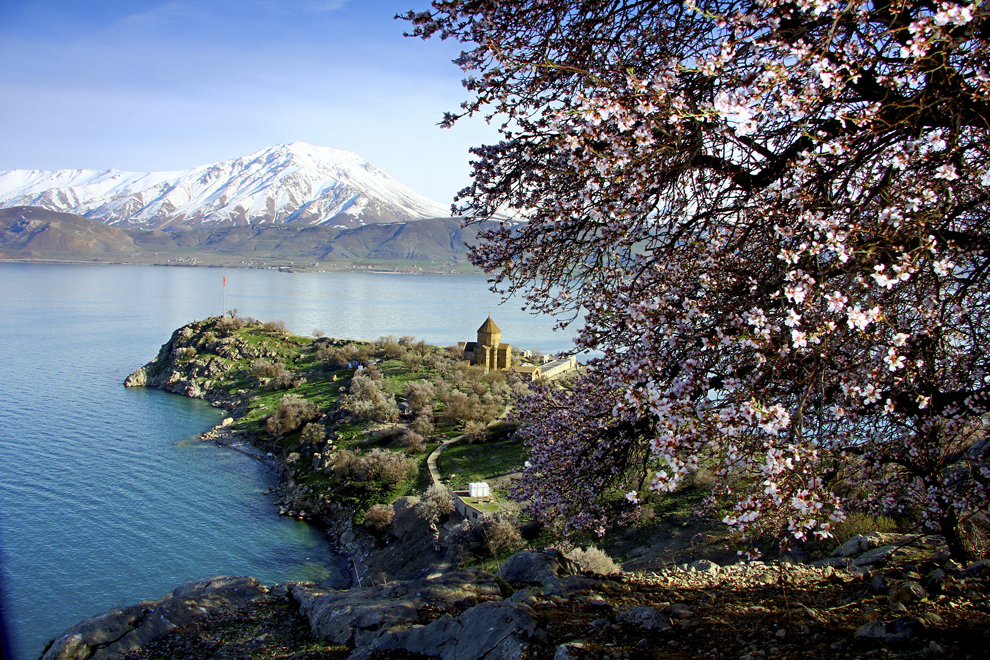 Migdali înfloriţi pot fi văzuţi pe insula Akdamar, în Lacul Van din Turcia, sâmbătă, 12 aprilie 2014.