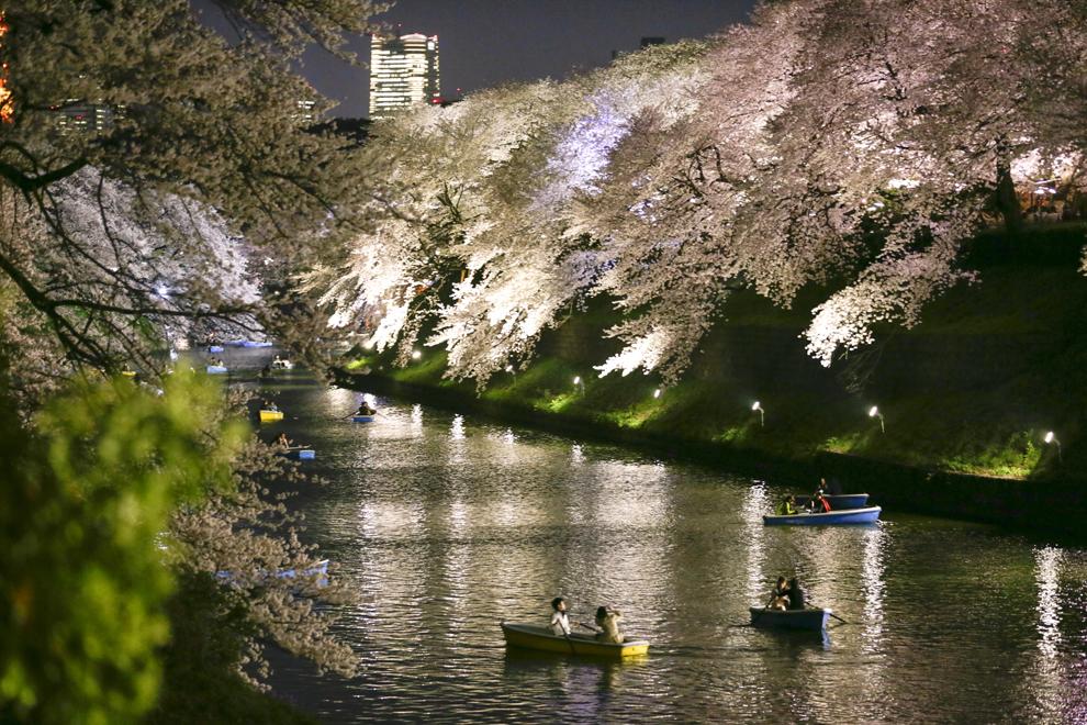 Persoane ce navighează pe apele râului Chidorigafuchi, în apropiere de Palatul Imperial, admiră cireşii înfloriţi, în Tokio, luni, 31 martie 2014.