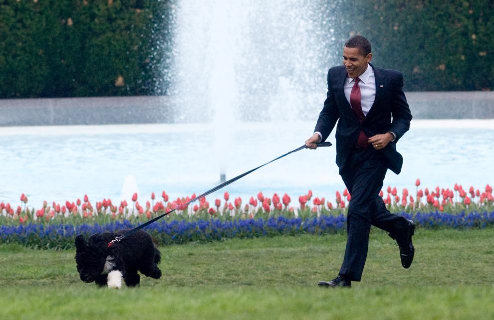 Preşedintele Statelor Unite ale Americii, Barack Obama se plimbă cu cainele său Bo, pe peluza de sud a Casei Albe, în Washington D.C., marţi, 14 aprilie 2009. (Saul Loeb / AFP)