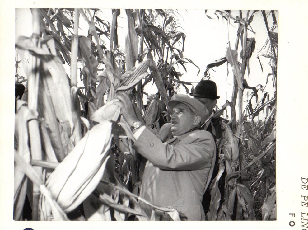Vizita de lucru a preşedintelui Nicolae Ceauşescu în unităţi agricole din judeţele Ilfov şi Ialomiţa. În imagini, pe ogoarele I.A.S. Afumaţi. (6.X.1979).