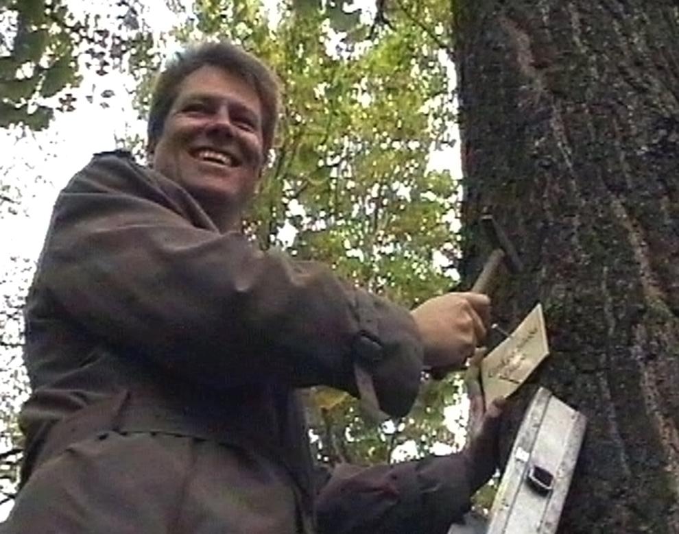 Primarul oraşului Sibiu, Klaus Iohannis, montează prima plachetă cu denumirea speciei pe unul din arborii din parcul Sub Arini din Sibiu, miercuri, 24 octombrie 2001.