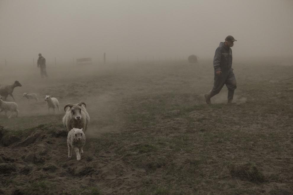 Doi ciobani islandezi încearcă să strângă o turmă de oi în timp ce merg printr-un nor de cenuşă provenind de la erupţia vulcanului Grimsvoetn, în Mulakot, duminică, 22 mai 2011.