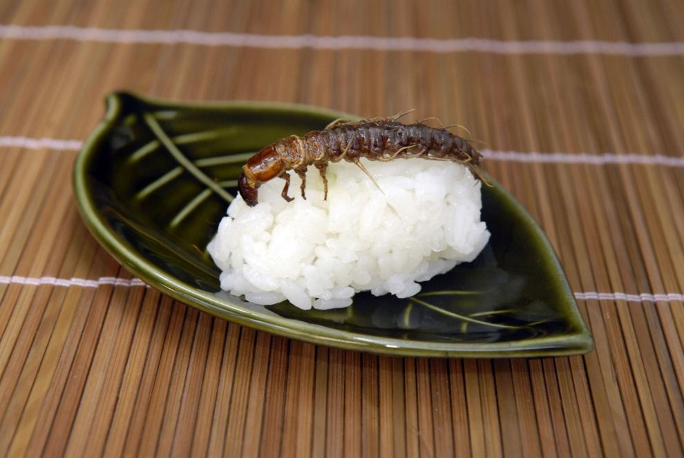 Sushi cu larvă de dobsonfly este prezentată în Tokyo, Japonia, marţi, 28 octombrie 2008.
