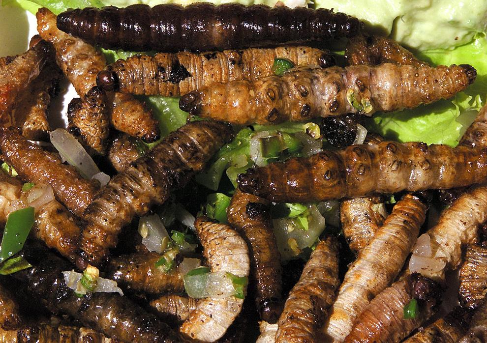 O porţie de viermi sote, o delicatesă mexicană, poate fi văzută în restaurantul Girasoles din Mexico City, vineri, 19 octombrie 2001.