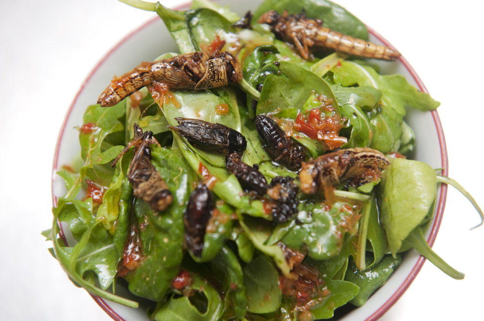 O salată love-bug, ce conţine lăcuste şi greieri, este prezentată în restaurantul Archipelago, unde insectele sunt folosite ca ingrediente, în Londra, Marea Britanie, joi, 1 septembrie 2011.