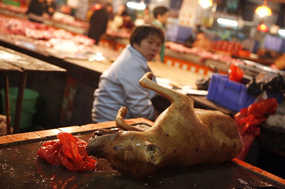 Un câine este expus spre vânzare într-o piaţă de câini din sudul Chinei. În timp ce Marea Britanie şi Europa sunt afectate de scandalul cărnii de cal, chinezii se întreabă unde este problema.