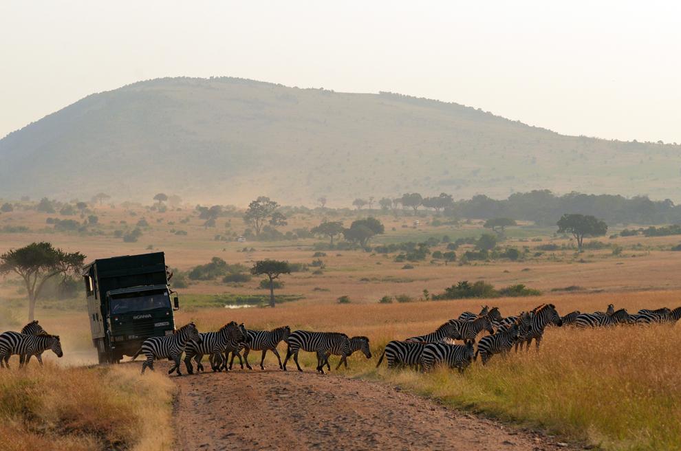 O turmă de zebre traversează un drum de safari din rezervaţia Masai Mara, Kenya, luni, 15 iulie 2013.
