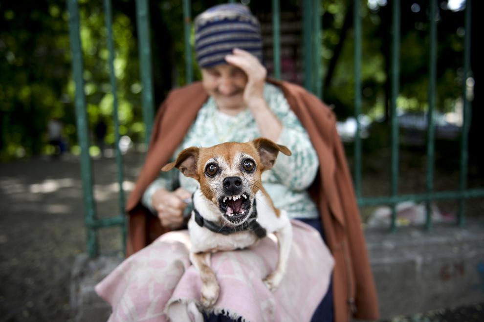 Un câine, ţinut în braţe de o femeie, latră, la intrarea în parcul Cişmigiu din Bucureşti, luni, 8 iulie 2013.