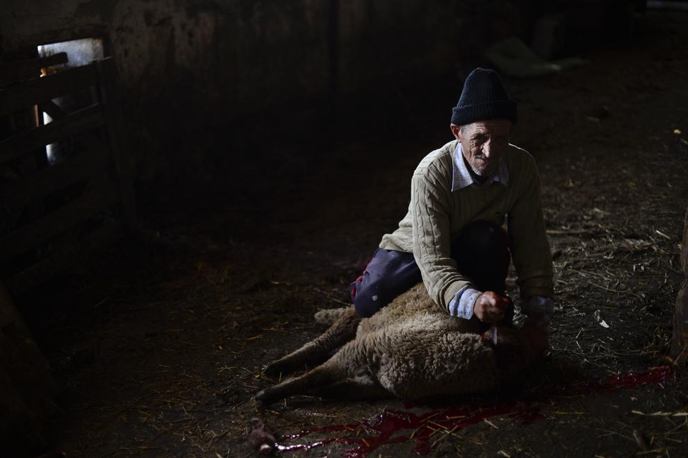 Simion Ionel, 64 de ani, zilier, sacrifică mielul primit ca plată pentru munca depusă la stână, în localitatea Tudor Vladimirescu, judeţul Călăraşi, marţi, 15 aprilie 2014.