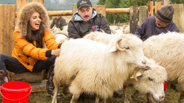 Lavinia Pârva şi Romică Ţociu au râs cu lacrimi la mulsul oilor