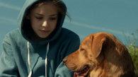 Oraşul câinilor - Fehér Isten (Ungaria, 2013) - trailer